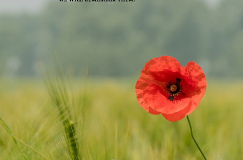 Poppy And Poem For Remembrance Day